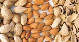 ارزان ترین قیمت بادام ربیعی در بازار